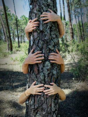 abrazo árbol conócenos
